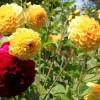 Flower-Commerce: Online Blumenhandel im Schnellcheck