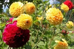 So verschönerst du deinen Garten